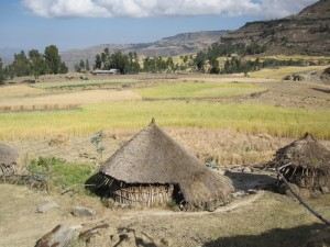 Wheat and Barley, northern Amhara region